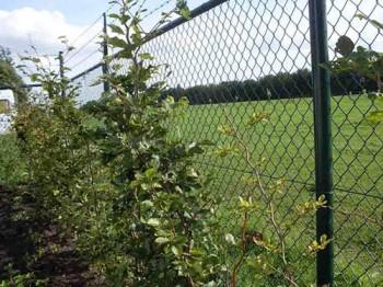 Натянутая сетка - забор (ограждение участка на даче)